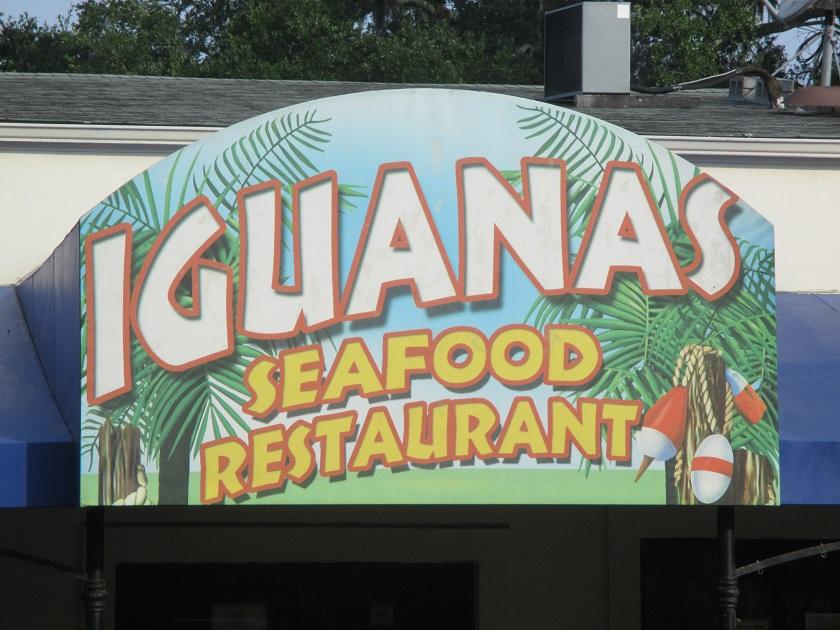 Iguanas, Saint Simons IslandGA